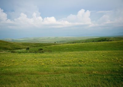 Green fields of Altai krai