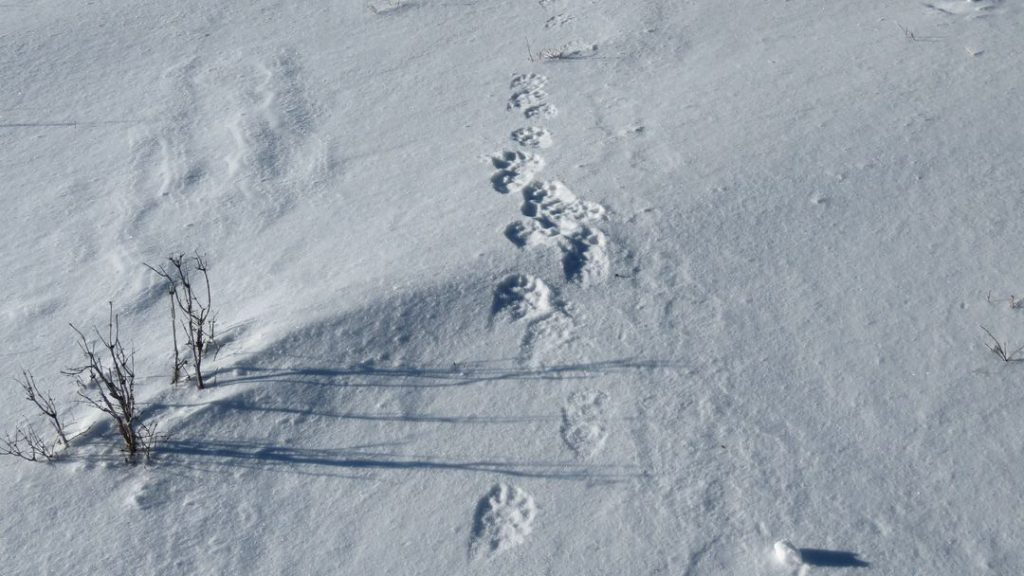 Footprints on snow in Sailugem park