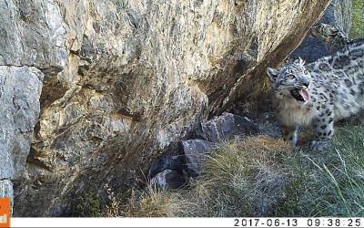 October 23 – International Snow Leopard Day!
