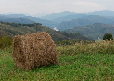 Hay and view to the Charysh river valley