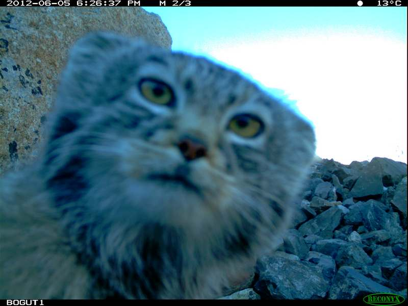 Have you ever checked a wildcamera in real wild nature like Siberia?!?