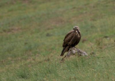 bbirdwatching in Altai