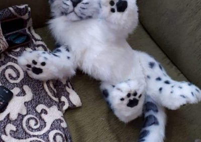 snow leopard (1)